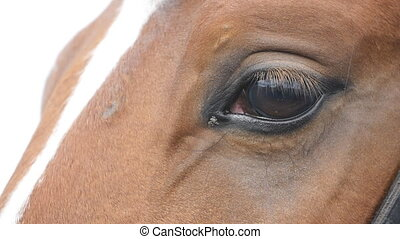 Close up view of the eye of a beautiful brown horse. Equine eye blinking