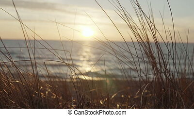 Close-up view of the grass, wind stirs the plant. Woman walking on the background on the shore of the beach on sunset.
