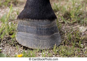Horse hoof with horseshoe