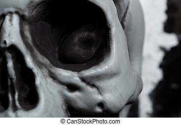 Close-up view of the human skull