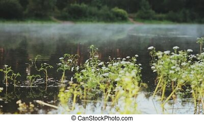 Close-up view of the water plants and fog floats over the...