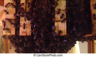 Close up view of the working bees o