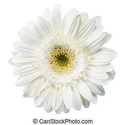 close up view of white daisy