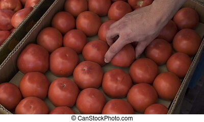 Close up view of young man hands choosing the tomatoes at the fruit market