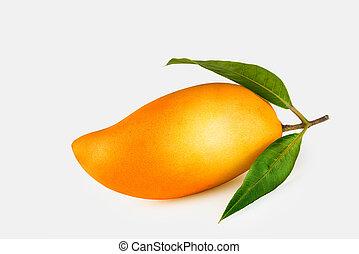 Close up view on nice fresh mango on white back