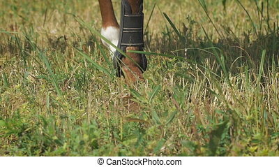 Close-up view on the hooves of horse's legs at a field....