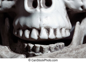 Close-up view on the human skull