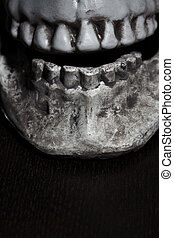Close-up view on the human skull - Close-up vertical photo...