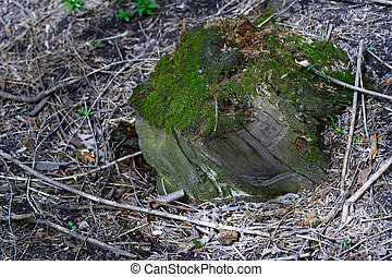 Close-up view on the tree stump with green moss