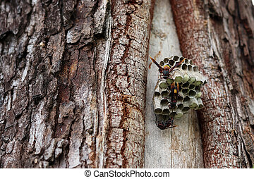 Close up wasps constructing and protecting larvae on the nest.