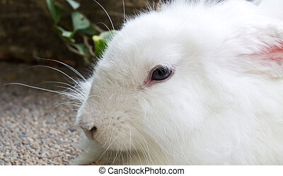 close-up white rabbit in the park