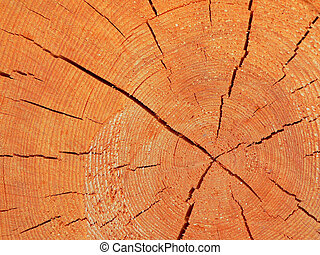 Close up wooden cut texture - abstract background
