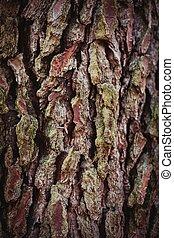Close-up wooden trunk texture