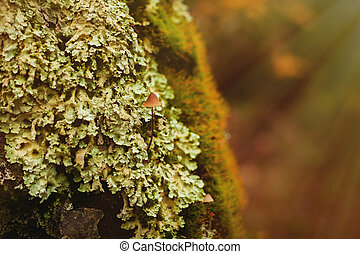 Close-up wooden trunk with green moss