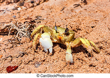 Close-up yellow crab on sand