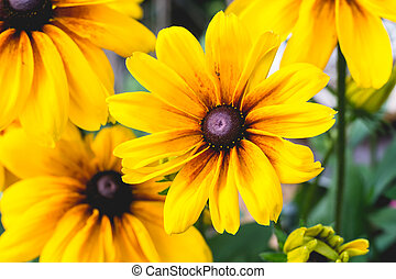 Close-up yellow flowers - Close-up cropped image of...