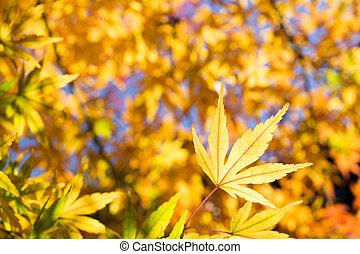 Close up yellow leaf