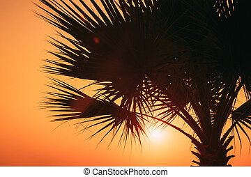Close View Of Dark Black Palm Trunk Silhouette In Natural Sunlight Of Bright Sun. Sunshine Through Palm Branches