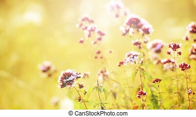 Close view on landscape with wild flowers in meadow. Beautiful summer background.