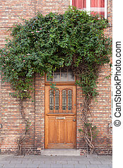Closed door with vines on the street