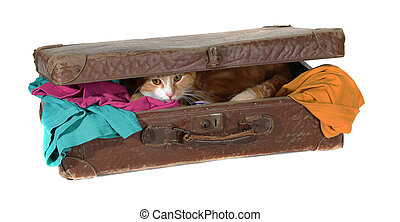 closed suitcase with clothes and cute tomcat