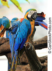 Closed Up Macaw