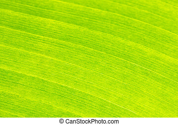 Closed up shot of green anana leaf .