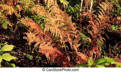 Closer image of the withered ferns to closely see how it...