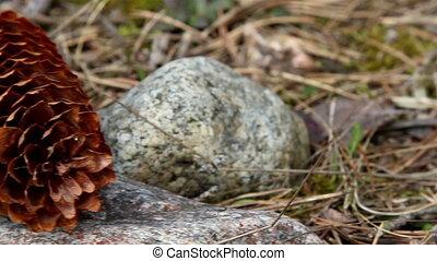 Closer look of a fir cone