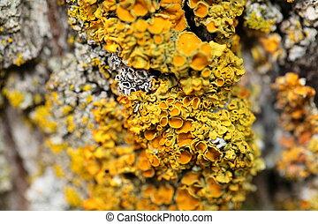 closeup, écorce, arbre, jaune, champignon