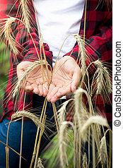 closeup , εικόνα , από , νέος , γυναίκα , γεωργόs , κράτημα , ώριμος , σιτάρι , αυτιά , μέσα , ανάμιξη