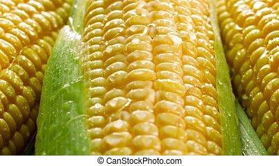 Closeup 4k panning video of big heap of fresh raw sweet corn...