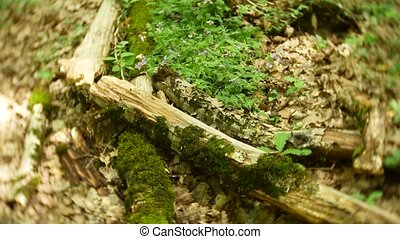 Closeup. a log in the moss in the forest in the summer....
