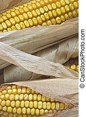 closeup, alapján, kukorica, ears.