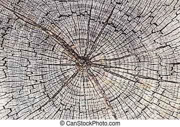 closeup, anneaux, arbre, texture