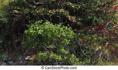 closeup, arbre, jungle