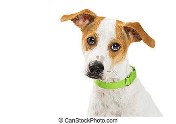 Closeup Attentive Dog - Mixed Medium Size Breed