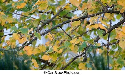 Closeup autumn city park - Closeup footage Leaves autumn...
