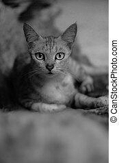 Closeup beautiful cat