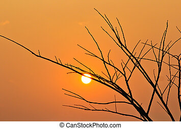 Closeup branch on a sunset background