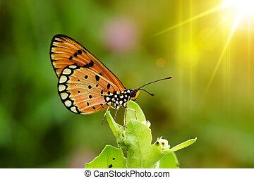 Closeup butterfly
