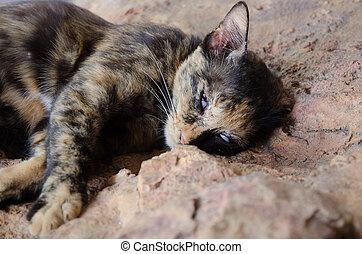 cat is sleeping on the floor. Sleeping cat.