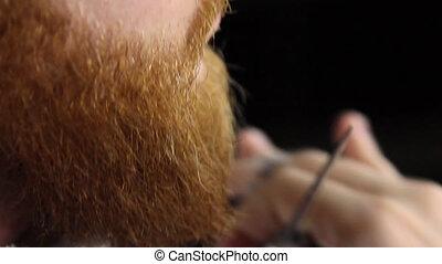 Closeup cutting and grooming beard