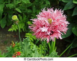 closeup, de, fleurs, dans, a, jardin, monture
