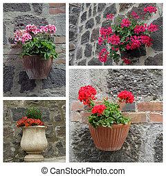 closeup, de, florescendo, plantas, exterior, casa, -, colagem