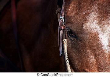 closeup, di, cavallo, occhio