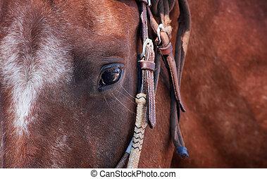closeup, di, horse\'s, occhio