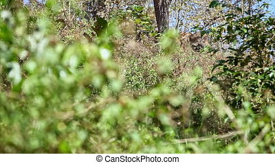 Closeup Elephant Hidden behind Trees Shakes Branches in Park...