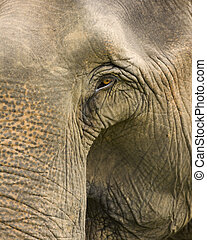Closeup elephant.