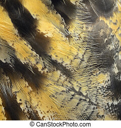 Eurasian Eagle Owl feathers - Closeup Eurasian Eagle Owl ...